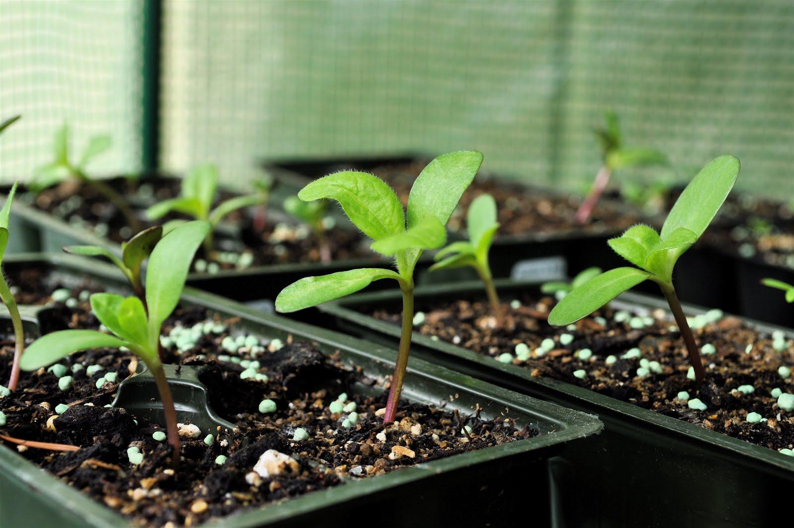 Starting Seeds Indoors Copia Home Garden